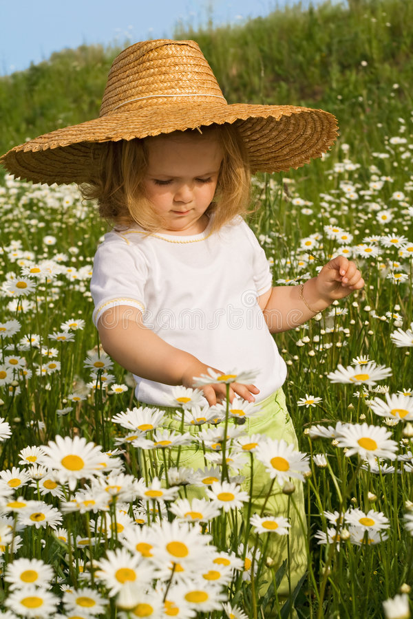 Little girl on the daisy field. Little girl admiring the flowers on a daisy field in spring or summer time stock image