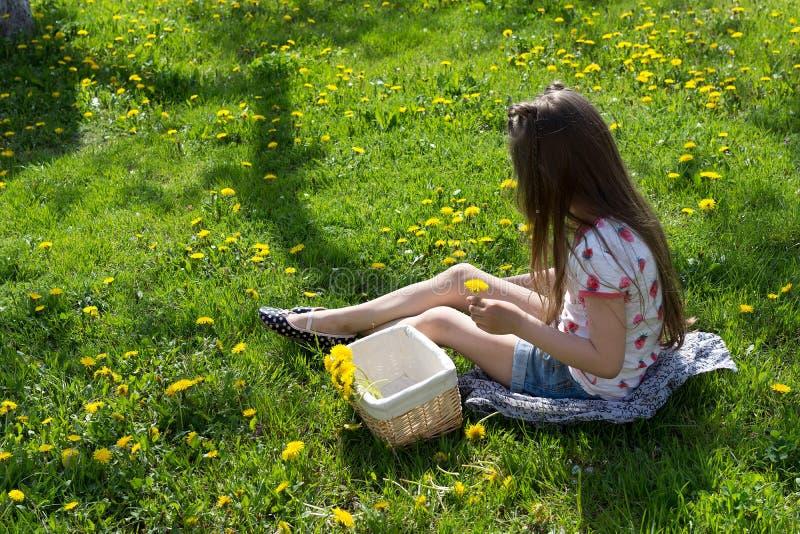 Little girl on dandelion lawn gathering dandelion.  stock photos