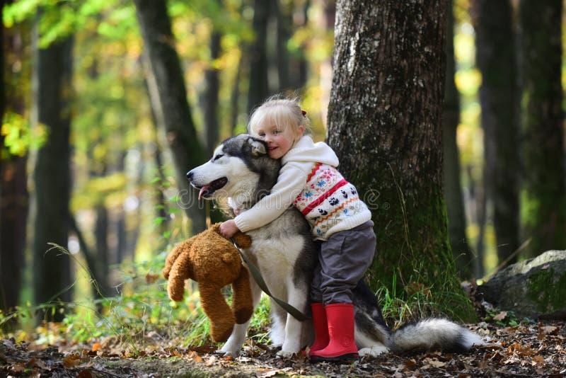 Little girl embracing husky dog in autumn park stock photography