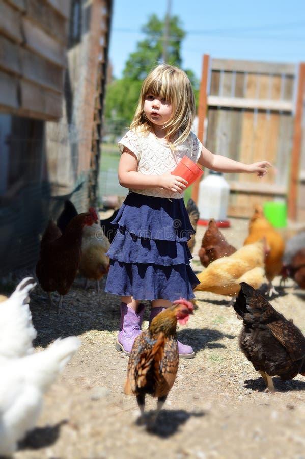 Little Girl feeding chickens. Little girl on farm feeding chickens