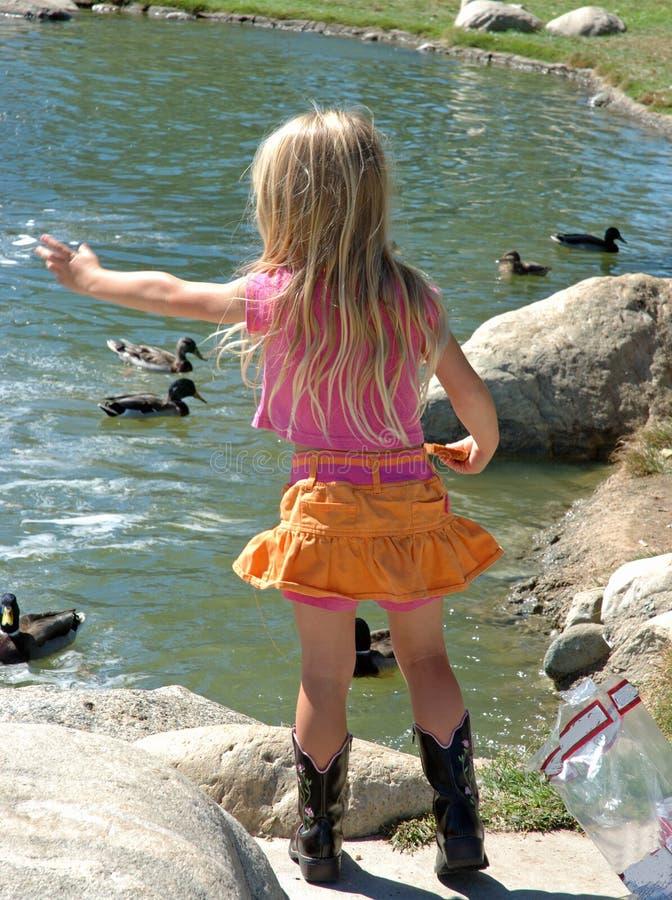 Little girl feeding ducks royalty free stock photos