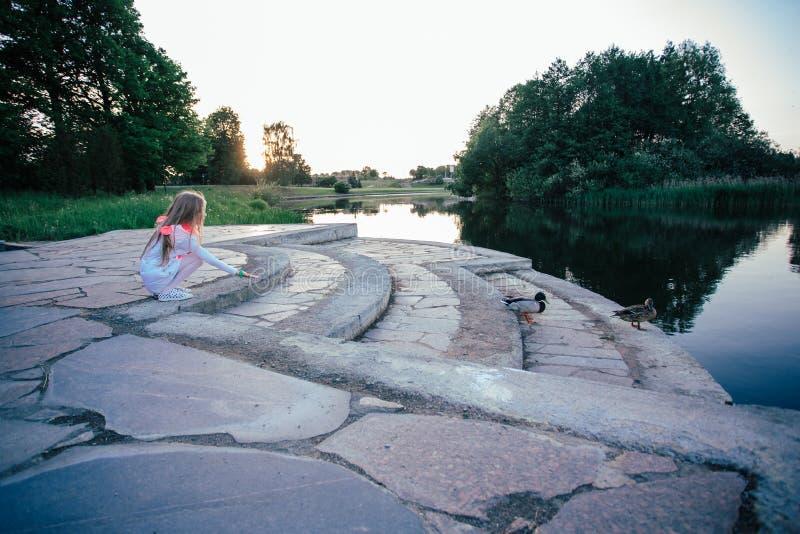 Little girl feeding ducks at the pond. stock image