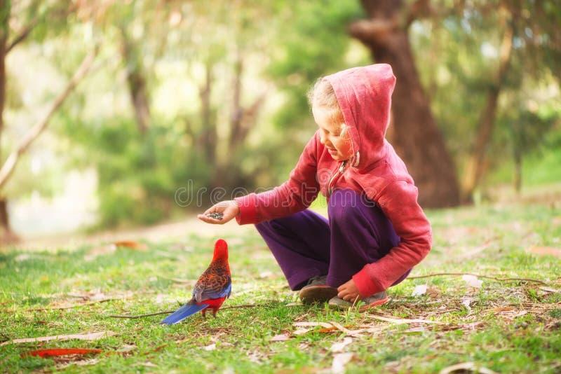 Little girl feeding parrot stock photos