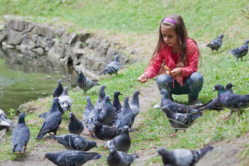 Little girl feeding pigeons stock image