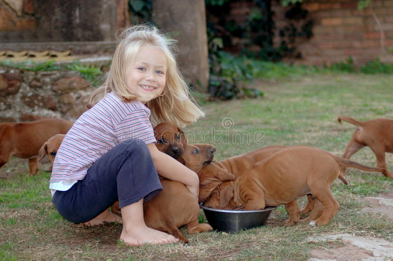 Little girl feeding puppies. A cute little Caucasian girl child with happy smiling facial expression feeding her young Rhodesian Ridgeback hound dog puppies in royalty free stock image