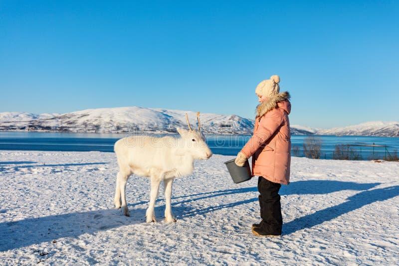 Little girl feeding reindeer stock photography