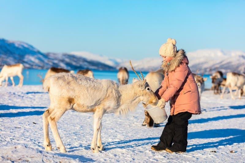 Little girl feeding reindeer stock photos