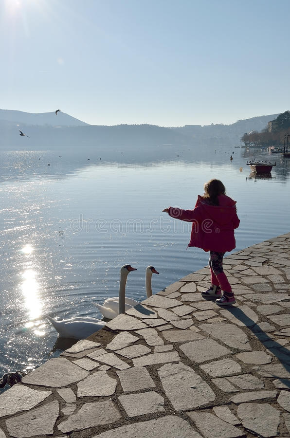 Little girl feeding swans royalty free stock photography