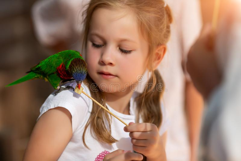 Little girl feeds parrots at the Australian Zoo in Israel royalty free stock photo