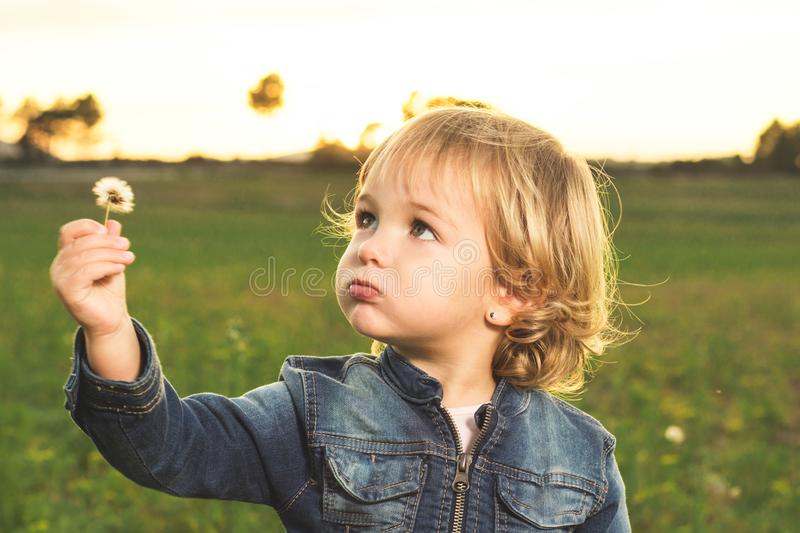 Little girl in the field with a flower in her hand royalty free stock images