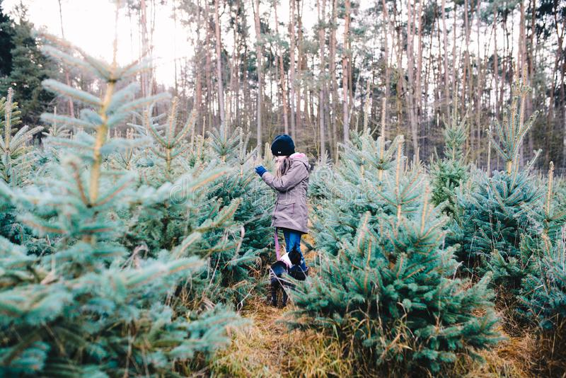 Little girl choosing a Christmas tree stock photography