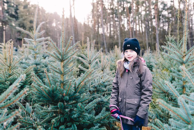 Little girl choosing a Christmas tree stock image