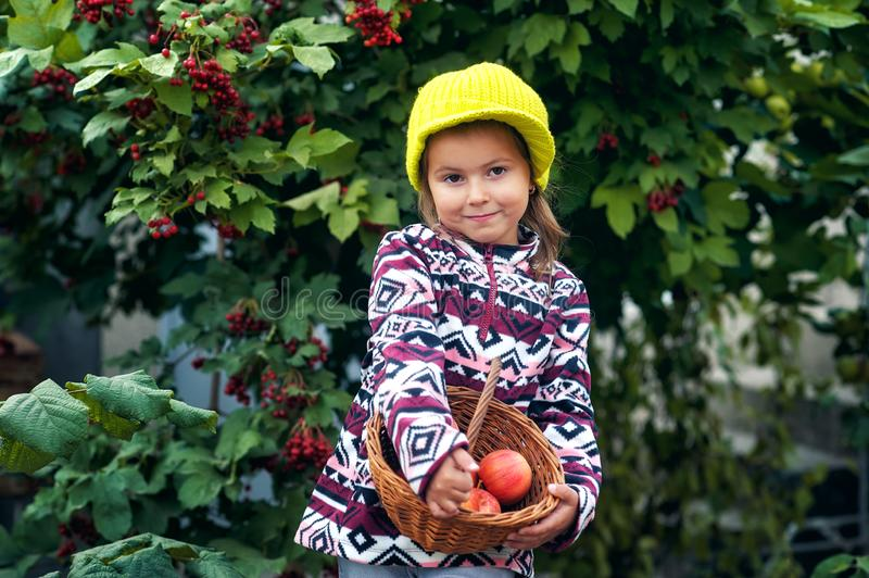 Little girl with fresh apples on the plot stock image
