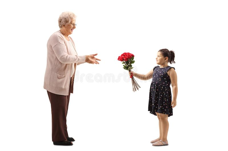 Little girl giving a bunch of red roses to a grandmother. Full length shot of a little girl giving a bunch of red roses to a grandmother isolated on white royalty free stock photo