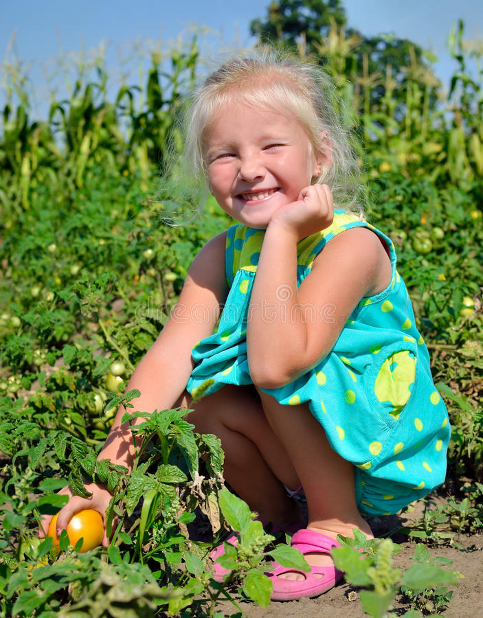 A little girl is harvesting tomatoes on a kitchen-garden stock photos