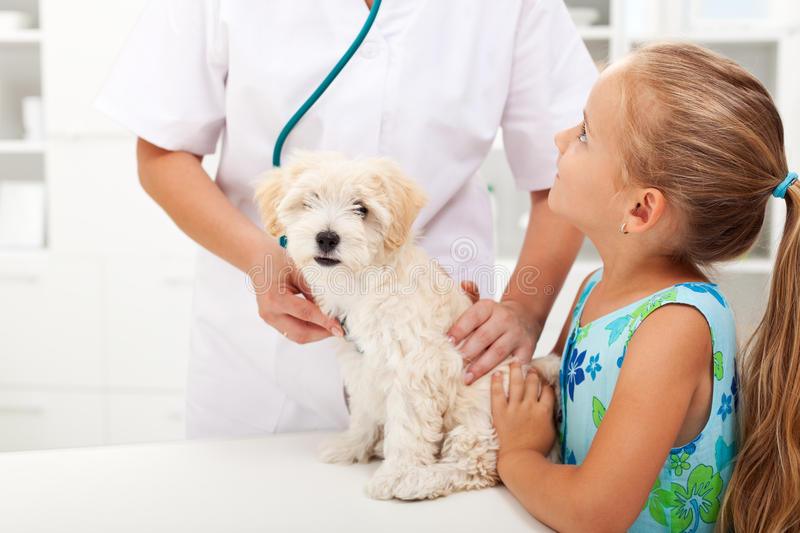 Little girl and her fluffy pet at the vet royalty free stock photography