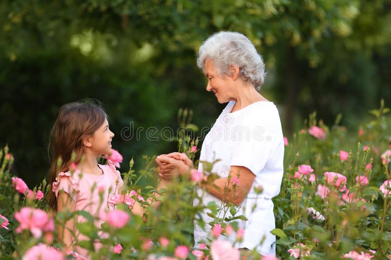 Little girl with her grandmother near rose bushes royalty free stock photography