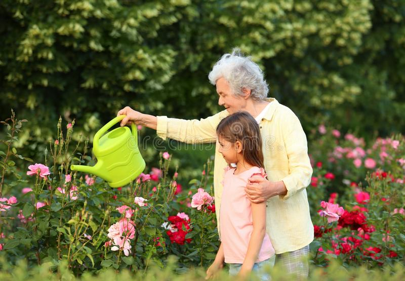 Little girl and her grandmother watering  in garden stock image