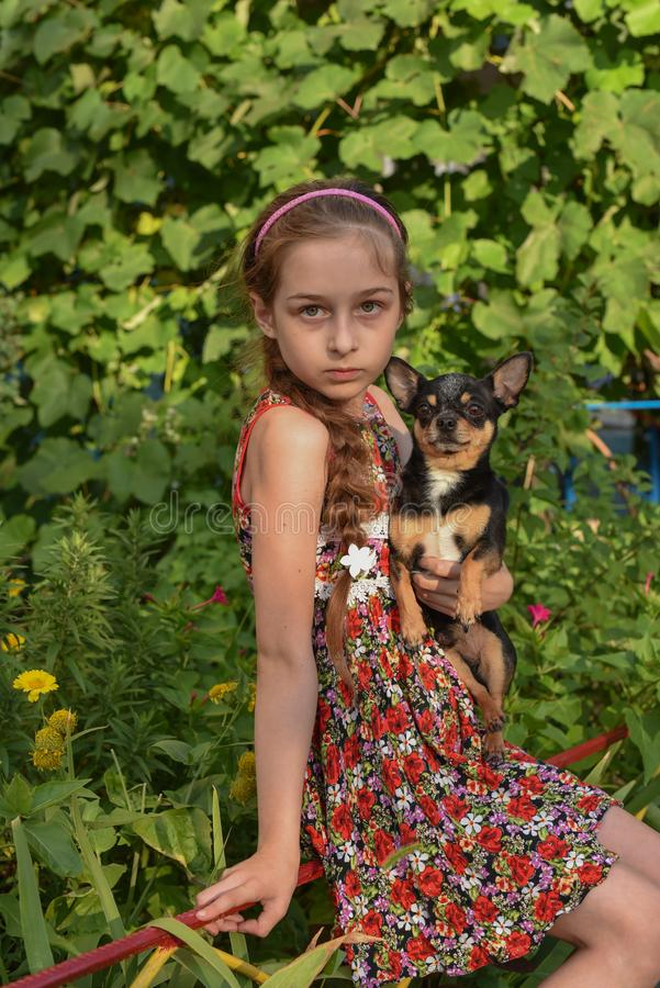 A little girl with her pet chihuahua dog. 9 year old baby and chihuahua.A girl in a flower dress on a walk with her pet. A girl on a background of greenery on a royalty free stock images