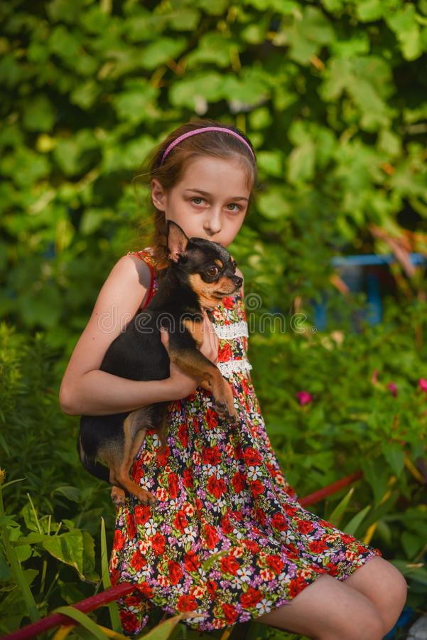 A little girl with her pet chihuahua dog. 9 year old baby and chihuahua.A girl in a flower dress on a walk with her pet. A girl on a background of greenery on a royalty free stock photo