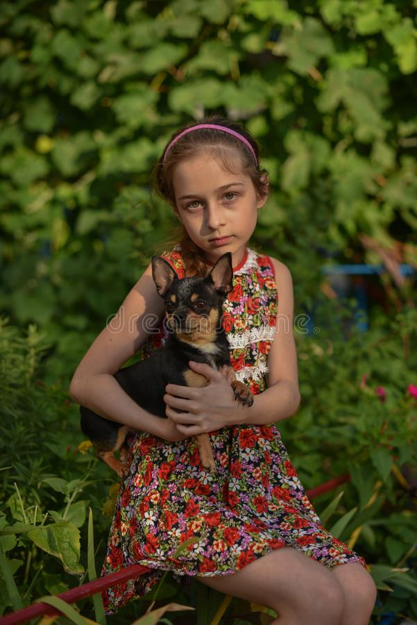 A little girl with her pet chihuahua dog. 9 year old baby and chihuahua.A girl in a flower dress on a walk with her pet. A girl on a background of greenery on a stock images