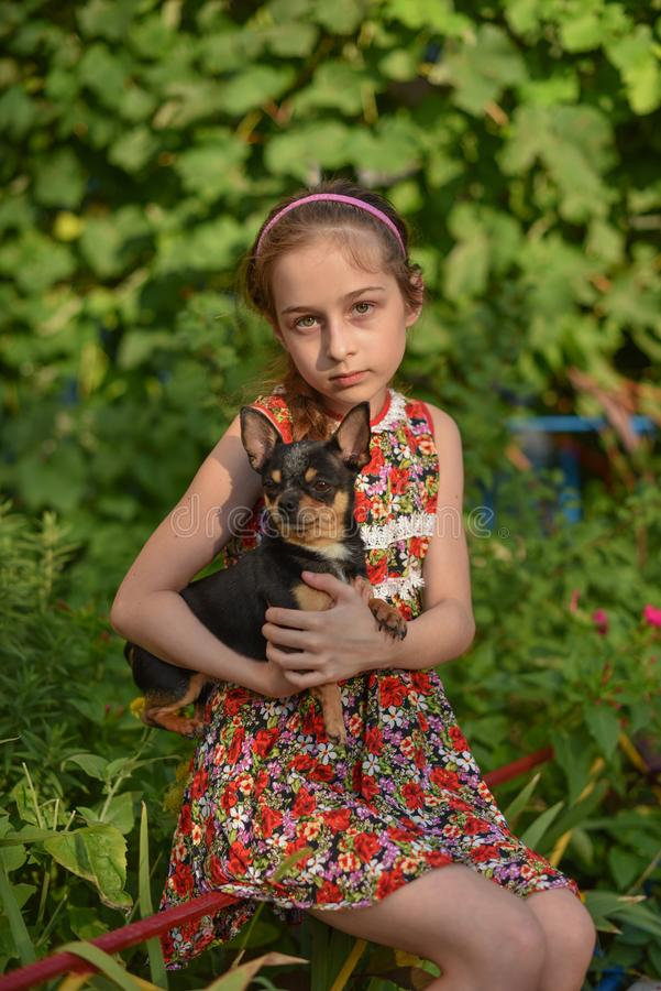 A little girl with her pet chihuahua dog. 9 year old baby and chihuahua.A girl in a flower dress on a walk with her pet. A girl on a background of greenery on a stock image