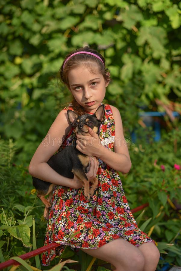 A little girl with her pet chihuahua dog. 9 year old baby and chihuahua.A girl in a flower dress on a walk with her pet. A girl on a background of greenery on a royalty free stock photos