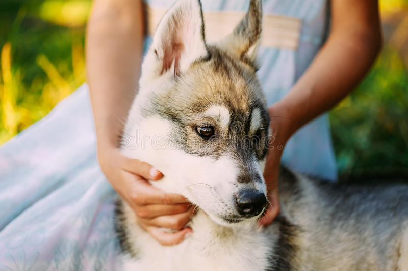 Little Girl And Her Puppy Dog Husky In Park In Summer stock photo