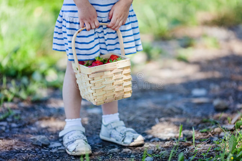 Little girl holding basket full of ripe strawberries at pick your own farm. Selective focus stock photo