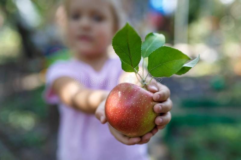 Little girl is holding the beautiful ripe red apple with green leaves stock photos