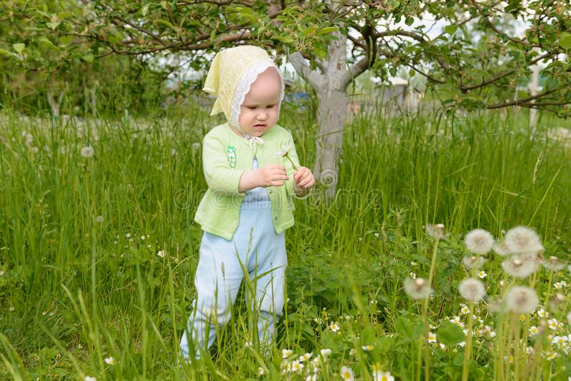 Little girl holding a dandelion and considering royalty free stock photography