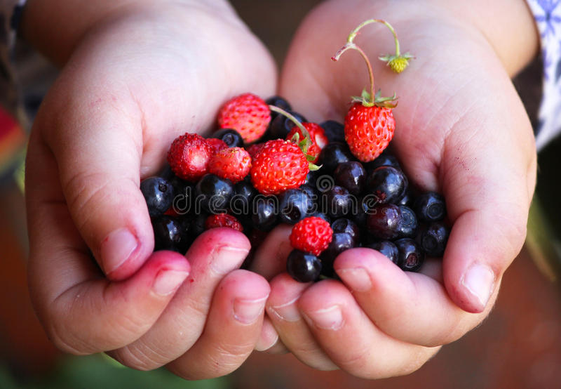Little girl holding forest berries in open palms. royalty free stock image