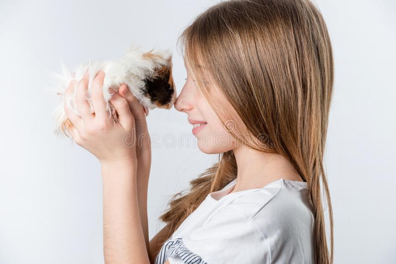 Little happy girl with guinea pig stock images