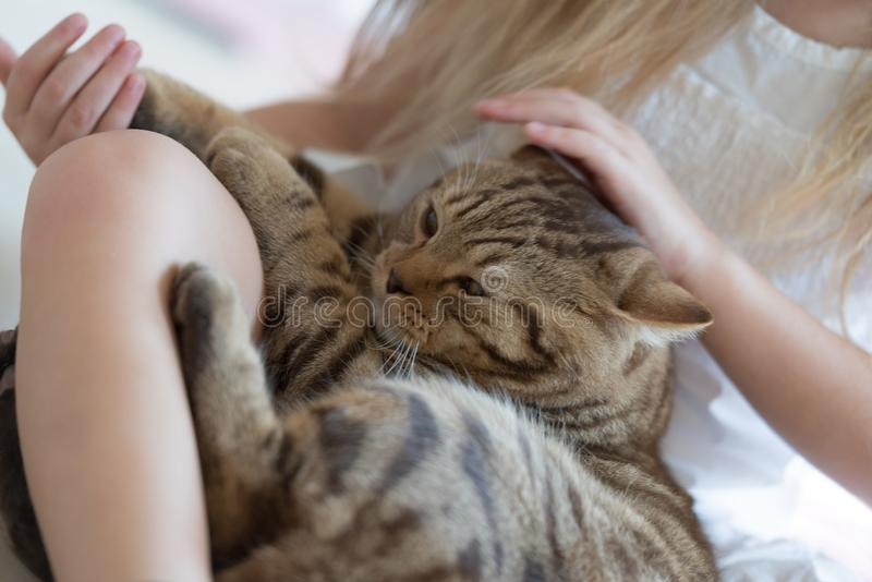 Child playing with cat. Little girl holding her cat royalty free stock photos