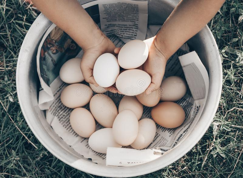 Little girl holding and picking good eggs quality organic and bring to the eye on the farm. Healthy foods. Easter. stock images