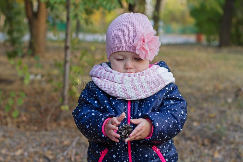 A little girl holds a fir cone in the park stock images