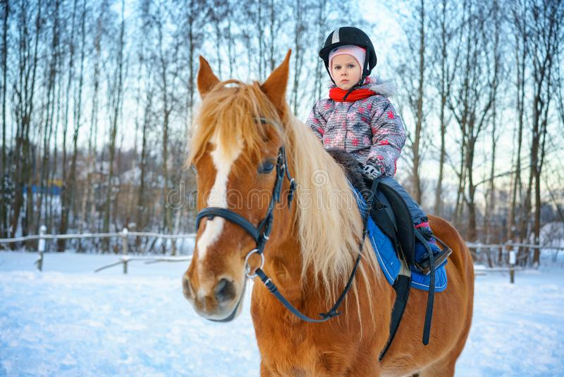 Little girl on a horse in winter, horseback riding.  royalty free stock image