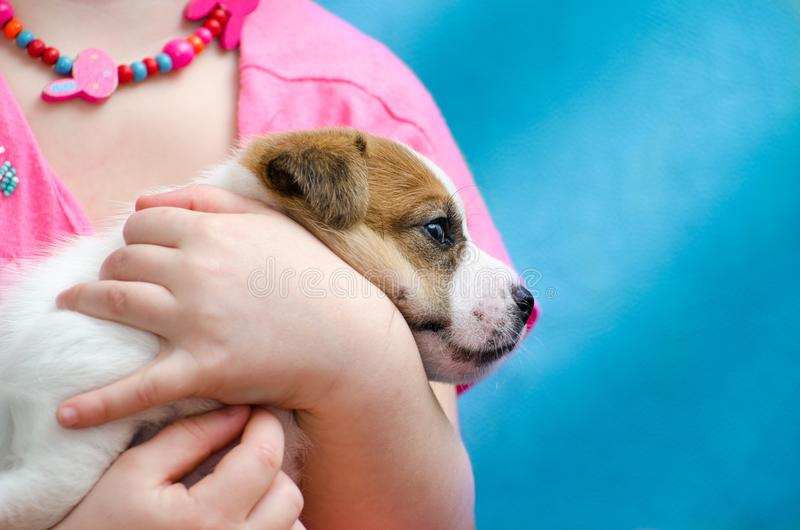 Little girl hugging a puppy jack russel terrier breed. She`s holding the dog on her hands. royalty free stock photo