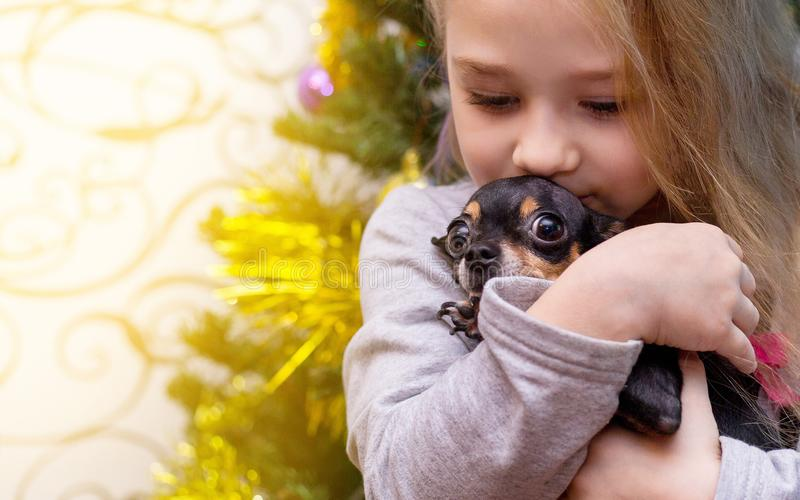 A little girl is kissing a dog stock photo