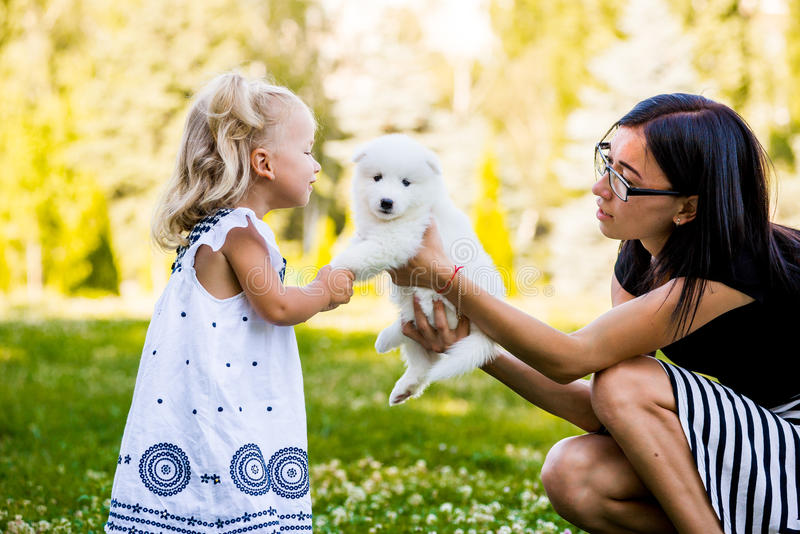 Little girl kissing her puppy Samoyed breed. In the park on the grass stock photo