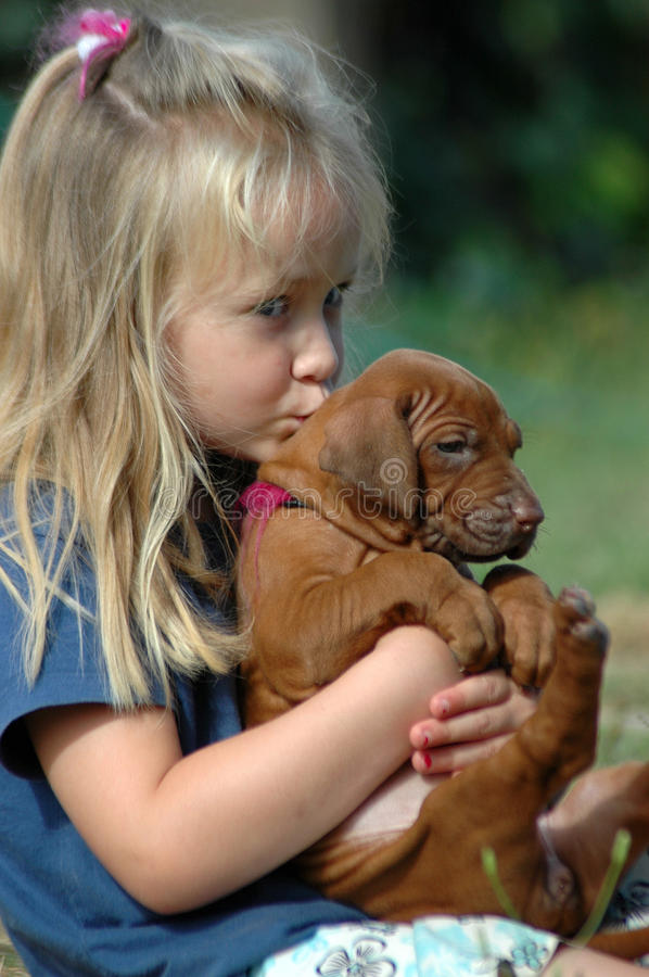 Little girl kissing puppy. A beautiful little Caucasian white girl child with long blond hair kissing and holding her cute Rhodesian Ridgeback hound dog puppy in stock image