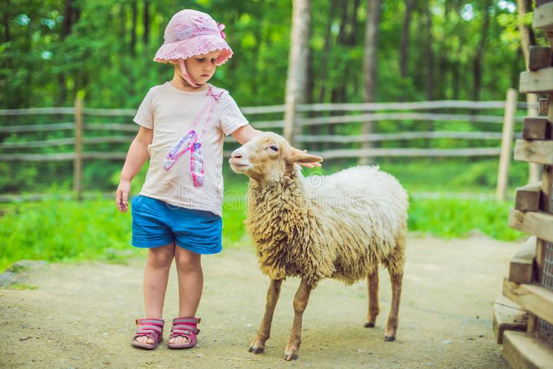 Little girl with lamb on the farm royalty free stock photos