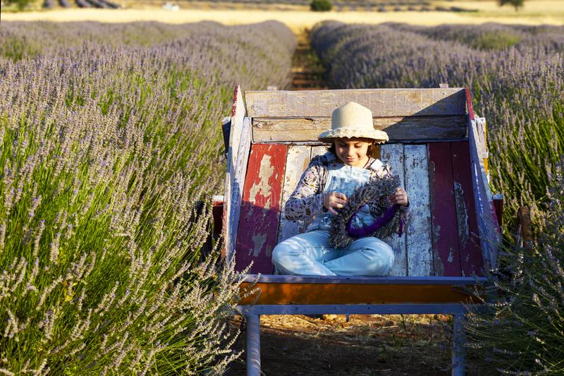Little girl in lavender field royalty free stock images