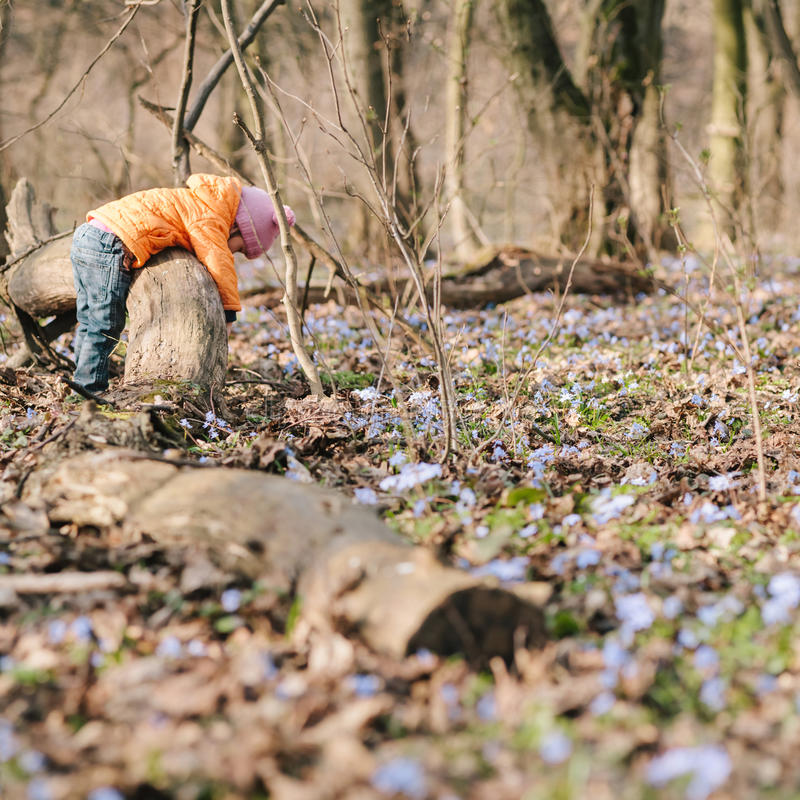Little girl learns nature. Woods royalty free stock photography