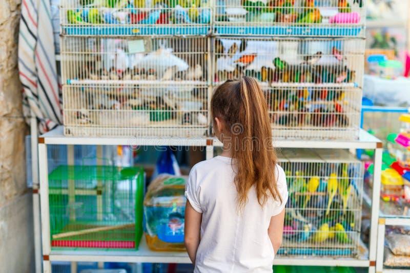 Girl at birds market stock photos