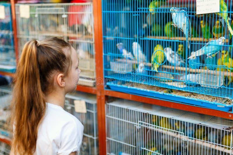 Girl at birds market stock photo