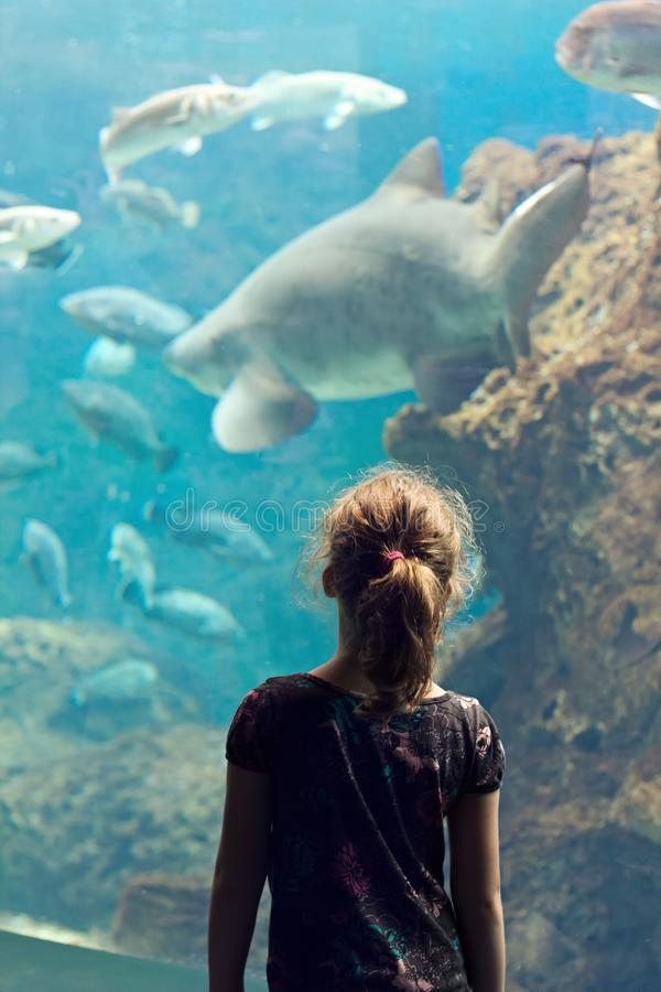 Little girl is looking at exotic fishes in the Aquarium. royalty free stock photo