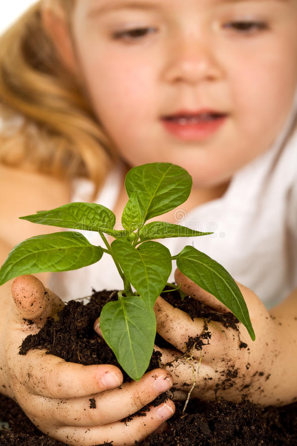Little girl looking at her plant stock photos