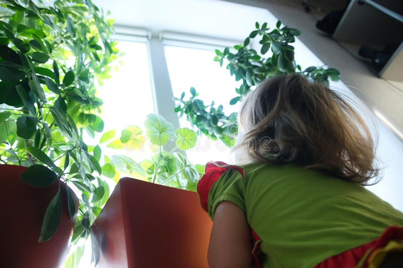 little girl looking up from below on plants on the window. big world stock photos