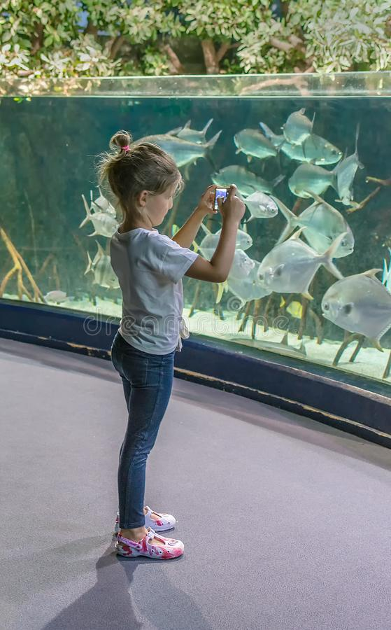 Little girl looks at the aquarium and takes pictures of big fish stock photos